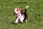 1280-578104230-beagle-puppy-running (1).jpg