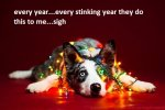 i-took-christmas-themed-dog-portraits-to-wish-you-happy-holidays__880.jpg
