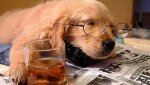 Sleeping-dog-with-tea.jpg