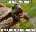 that-face-you-make-turtle-memes.jpg