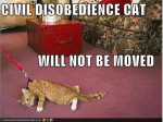Civil-Disobedience-Cat-Ghandi.png