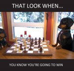 That-Look-When-You-Know-You-Are-Going-To-Win-Funny-Chess-Meme-Image.jpg