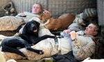 Its-a-Lab-Thing-Military-Labradors-with-Men.jpg