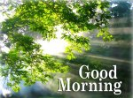 good_morning_with_nature1517247971.jpg