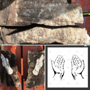 Jesus Christ's Praying Hands Fossil