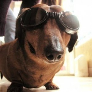 funny-dog-with-goggles.jpg