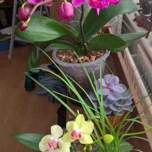 My Orchids.